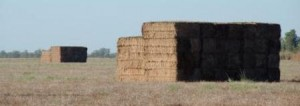 Hay bales Douglas Daly by Glenn Walker_compressed
