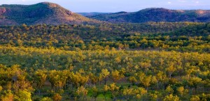Savanna at sunset, Kakadu National Park, Top End, Northern Territory